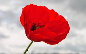 The Great War 100 years on - Why remembering is more important than ever...